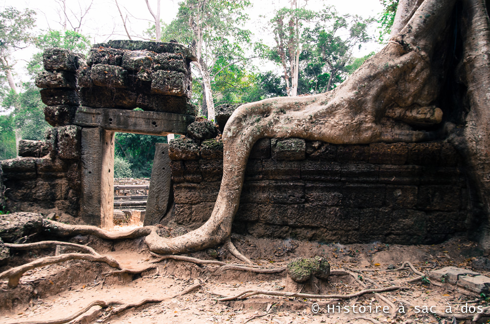 Temple Ta Prohm - Angkor