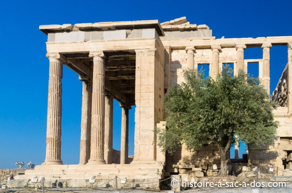 L'olivier d'Athéna, l'Acropole, Athènes