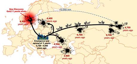 La pandémie de peste d'Europe en Asie
