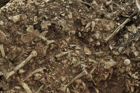 La peste présente en Europe il y a plus de 5000 ans