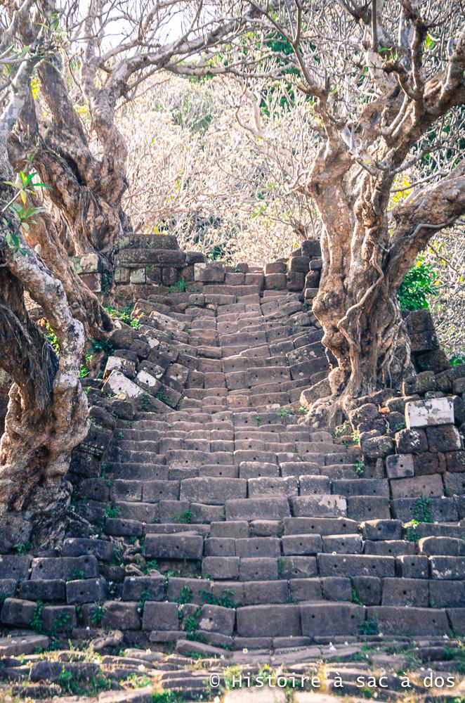 Escalier bordé de frangipanes - Wat Phu, Laos